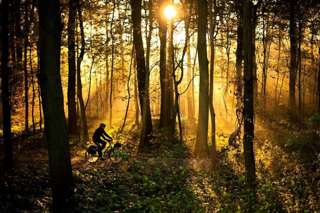 Auch bei Freizeitsportlern im Dreisamtal beliebt: der Wald  | Foto: Julian Stratenschulte (dpa)