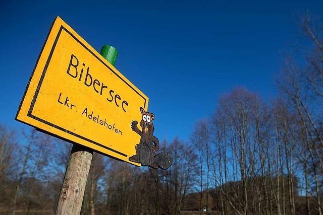 Von Bibern gebauter See ist sogar auf Google Maps verzeichnet