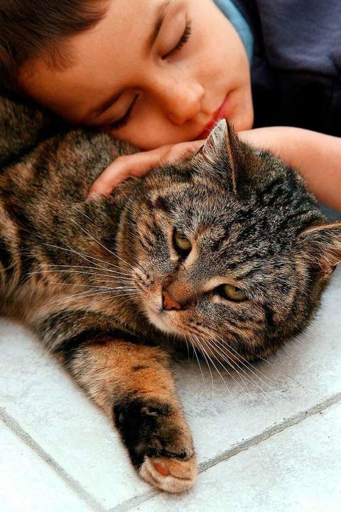 Schön: Kuscheln mit der Katze  | Foto: Z1022 Patrick Pleul