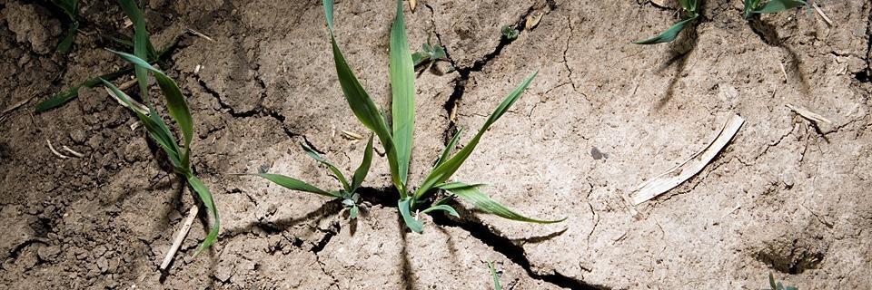 Forscher fürchten, 2020 könnte wieder ein Dürre-Jahr werden