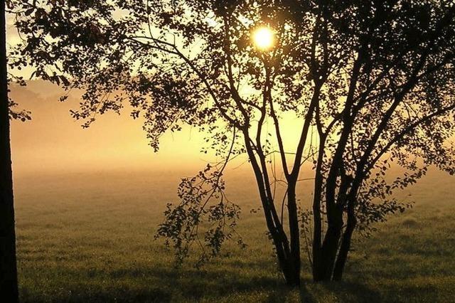Mehrheit empfiehlt Naturfläche
