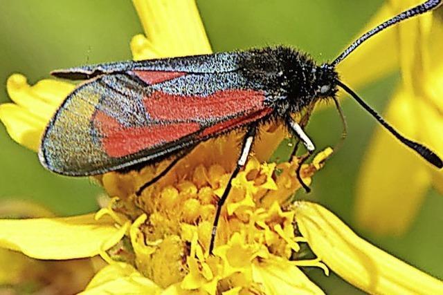 Biosphärengebiet will Insektenschutz beflügeln