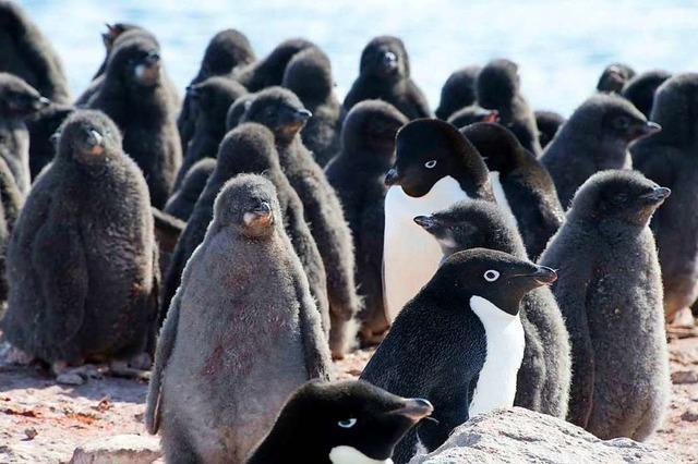 Was ist die Antarktis?
