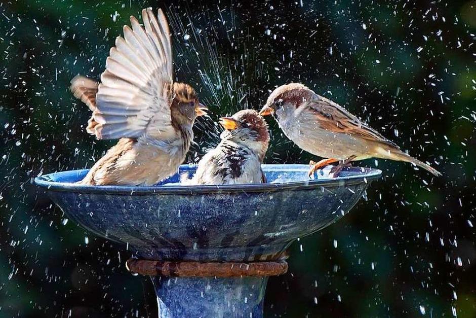 Der Gewinner 2018: Vögel in Bahlinger Tränke (Foto: Christiane Bierlein)