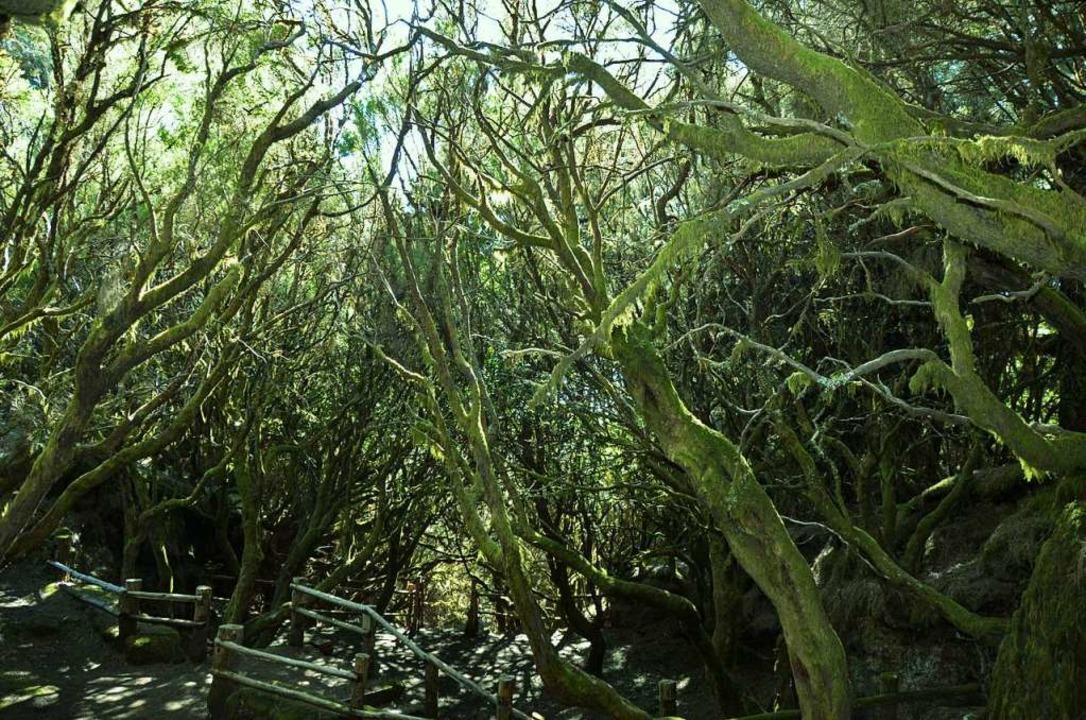 Fuente des Cruz de los Reyes: urtümliche Wälder im Landesinneren  | Foto: Anita Fertl