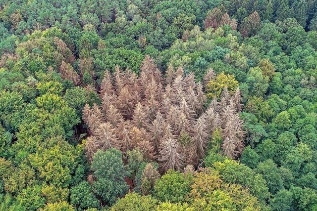 Der Wald ist ein großes Sorgenkind