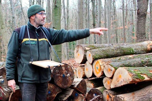 Holzversteigerungen sind bei privaten Nutzern im Landkreis Lörrach beliebt