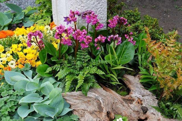 Pflegeleichte Pflanzen fürs Grab