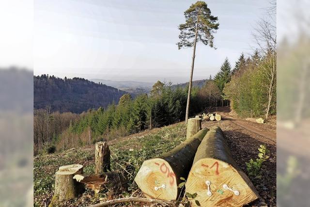 Klimawandel treibt Wandel im Wald