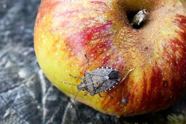 Wie können Schädlinge beim biologischen Anbau bekämpft werden?
