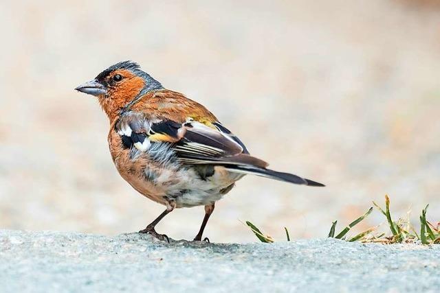 Aufgrund des milden Winters bleiben Vögel im Lande