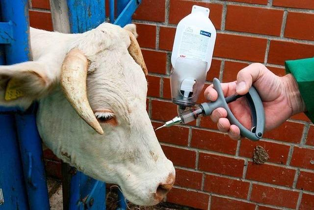 Wie die AfD und eine Schweizer Sekte die Tierimpfung instrumentalisieren