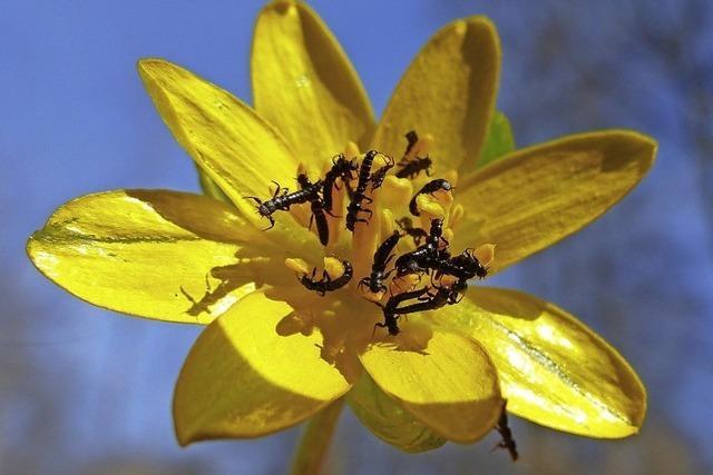 Leuchtende und krabbelnde Frühlingsboten