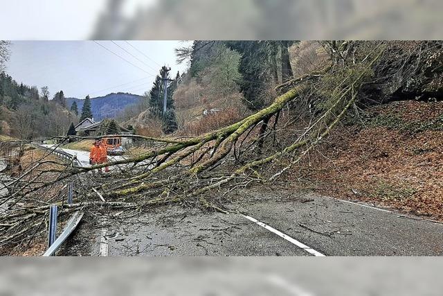 Sturm reißt Baum um