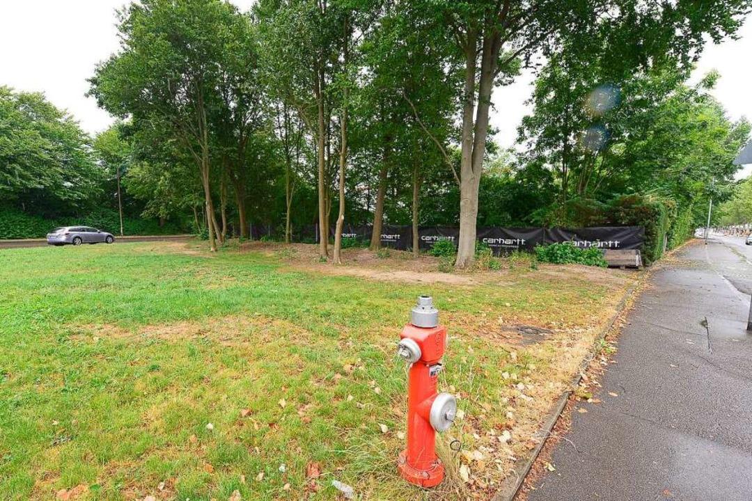 Der Tatort liegt nahe am Eingang des C... das Gebüsch teilweise gerodet worden.  | Foto: Ingo Schneider