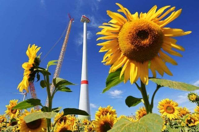Grünen, SPD und CDU wollen gemeinsamen Antrag zum Klima stellen