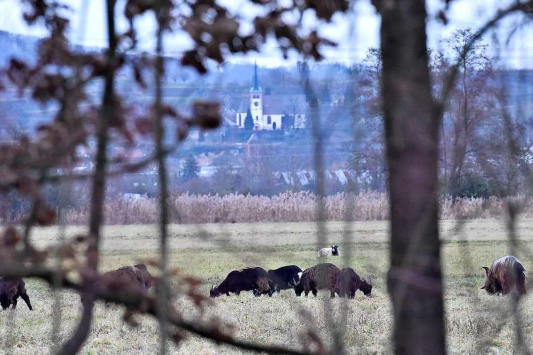 Aus dieser landwirtschaftlich genutzte...il Dietenbach teilweise auszugleichen.  | Foto: Markus Zimmermann