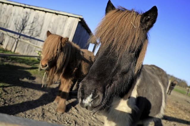 Pferdeglück in Ichenheim