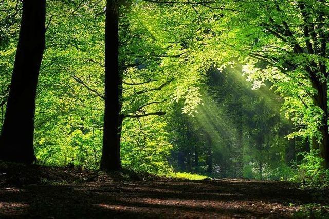 Freiburger Forstwissenschaftler widerspricht Wohlleben: