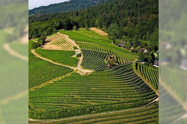 Investitionen in die Weinberge