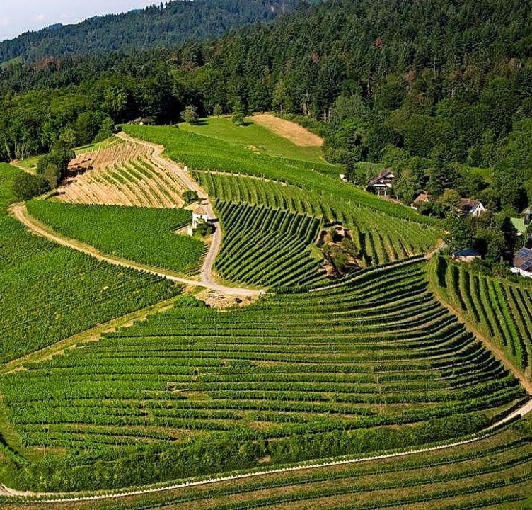 Im Muggardter Berg wurden für  70000 Euro Querterrassen geschaffen.  | Foto: WG Britzingen