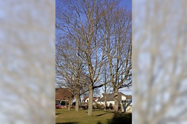 2500 Bäume für den Klimaschutz