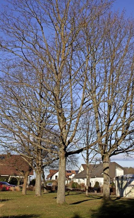 Mehr Bäume für den Klimaschutz soll es...straße, sondern auch auf Privatgrund.   | Foto: Adelbert Mutz