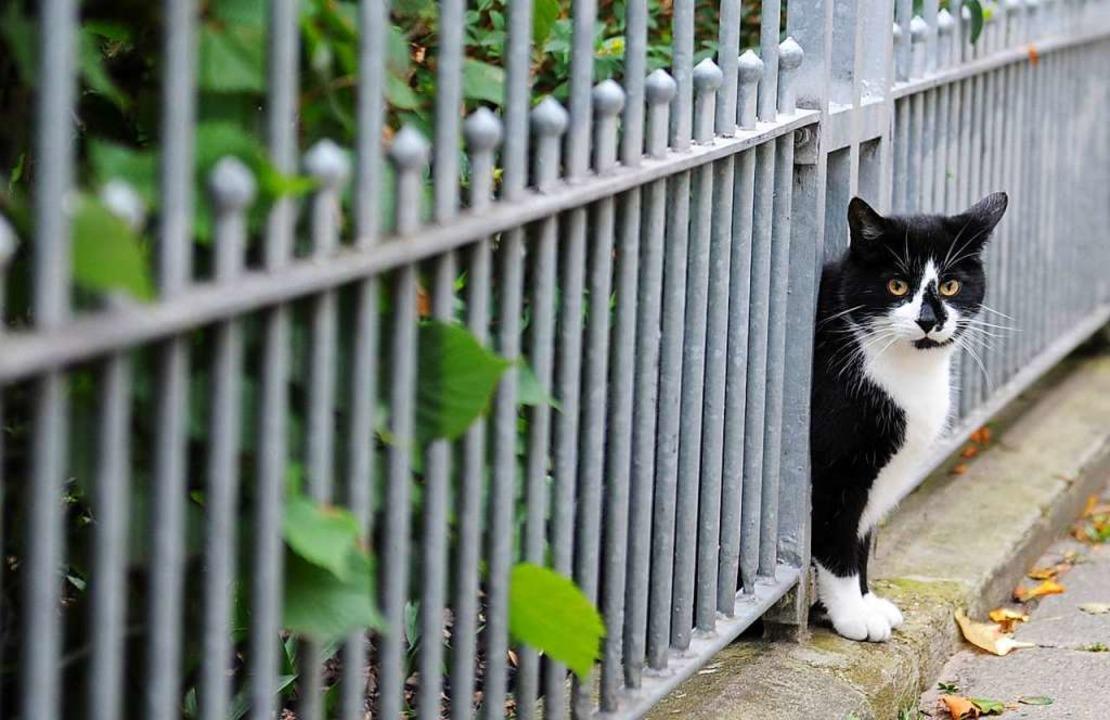 Um Zäune ging es in der jüngsten Sitzu...diese Katze sind Zäune kein Hindernis.    Foto: Angelika Warmuth