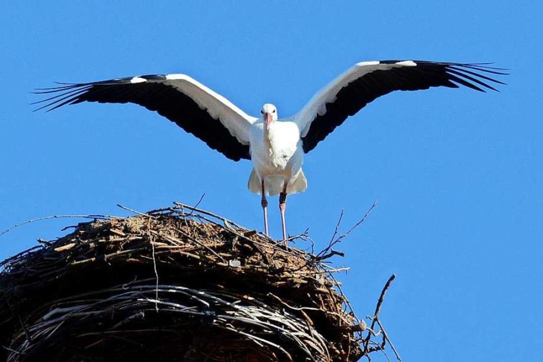 Dieser Storch wurde bereits im Januar ... Meinungen im Gemeinderat auseinander.  | Foto: Albert Rummler