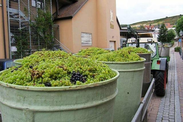 Winzergenossenschaft Bötzingen setzt weiter auf Handel