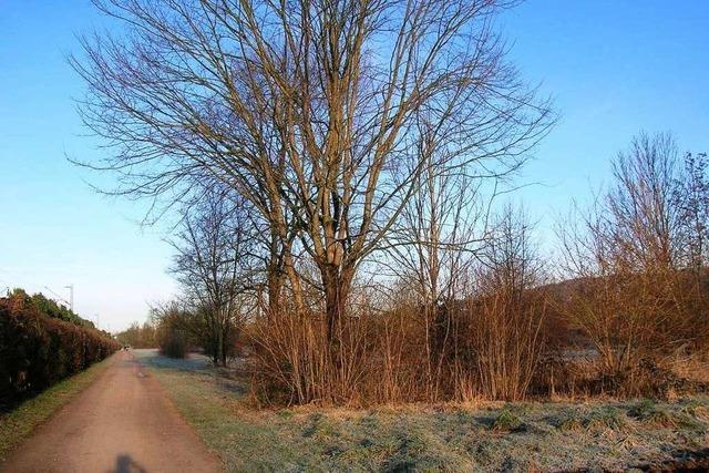 Emmendingen: Schutzverfahren für Haselwald-Spitzmatten läuft an