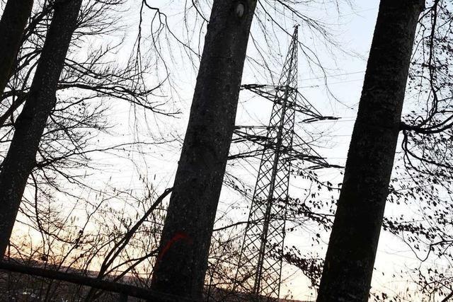13 alte Rotbuchen bedrohen in Steinen eine Stromleitung