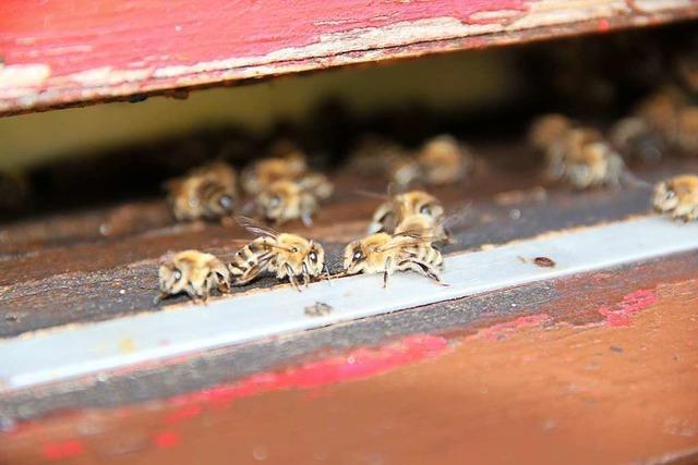 Mehr auf Insekten achten