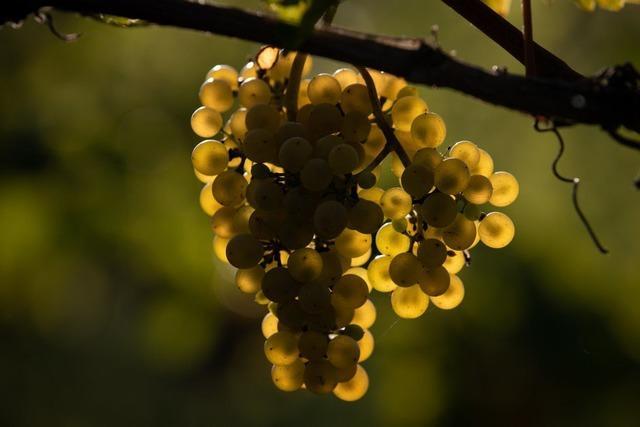 Warum Joschka Fischer den Badischen Landweinmarkt eröffnet