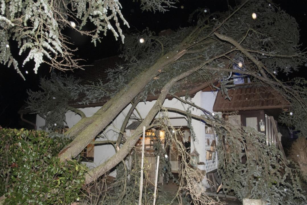 Im Müllheimer Ortsteil Niederweiler st...in Baum auf das Dach eines Wohnhauses.  | Foto: Volker Münch