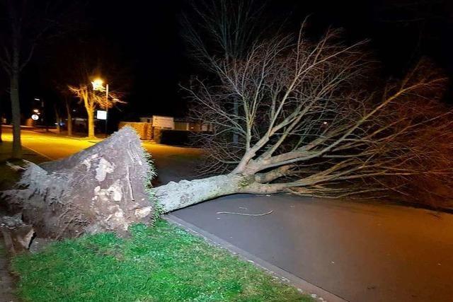 Umgefallene Bäume und gesperrte Straßen nach dem Orkantief in der Ortenau