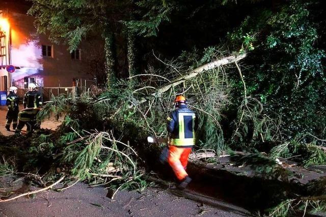 Waldkircher Feuerwehr muss Bäume von den Straßen räumen