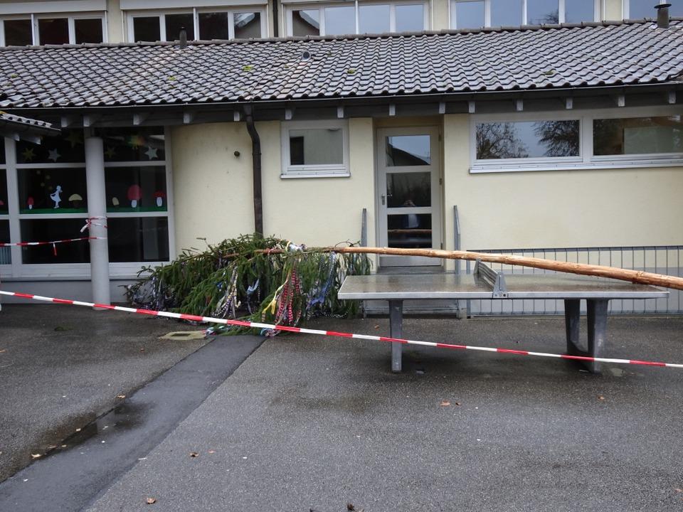Der Narrenbaum wurde zur Sicherheit gelegt.  | Foto: Helmut Kohler
