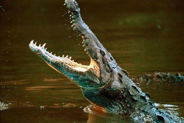 Warum jagen manche Menschen Krokodile?