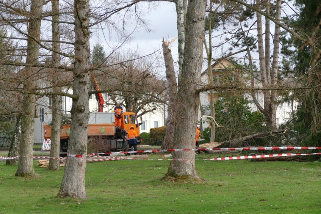 Sturmschäden im Herbert-King-Park in Rheinfelden  | Foto: Elena Borchers
