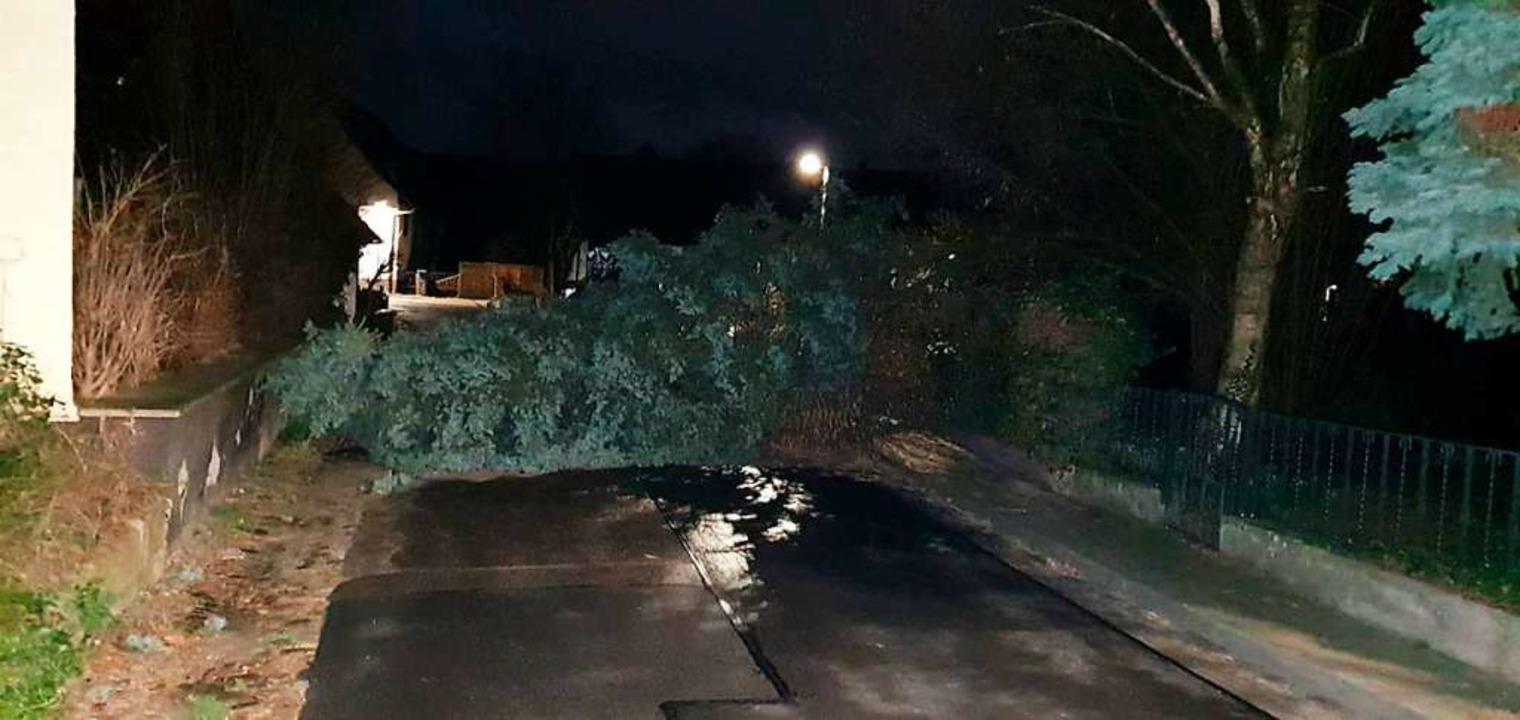 Der umgestürzte Baum in Oberkrozingen  | Foto: Feuerwehr Bad Krozingen