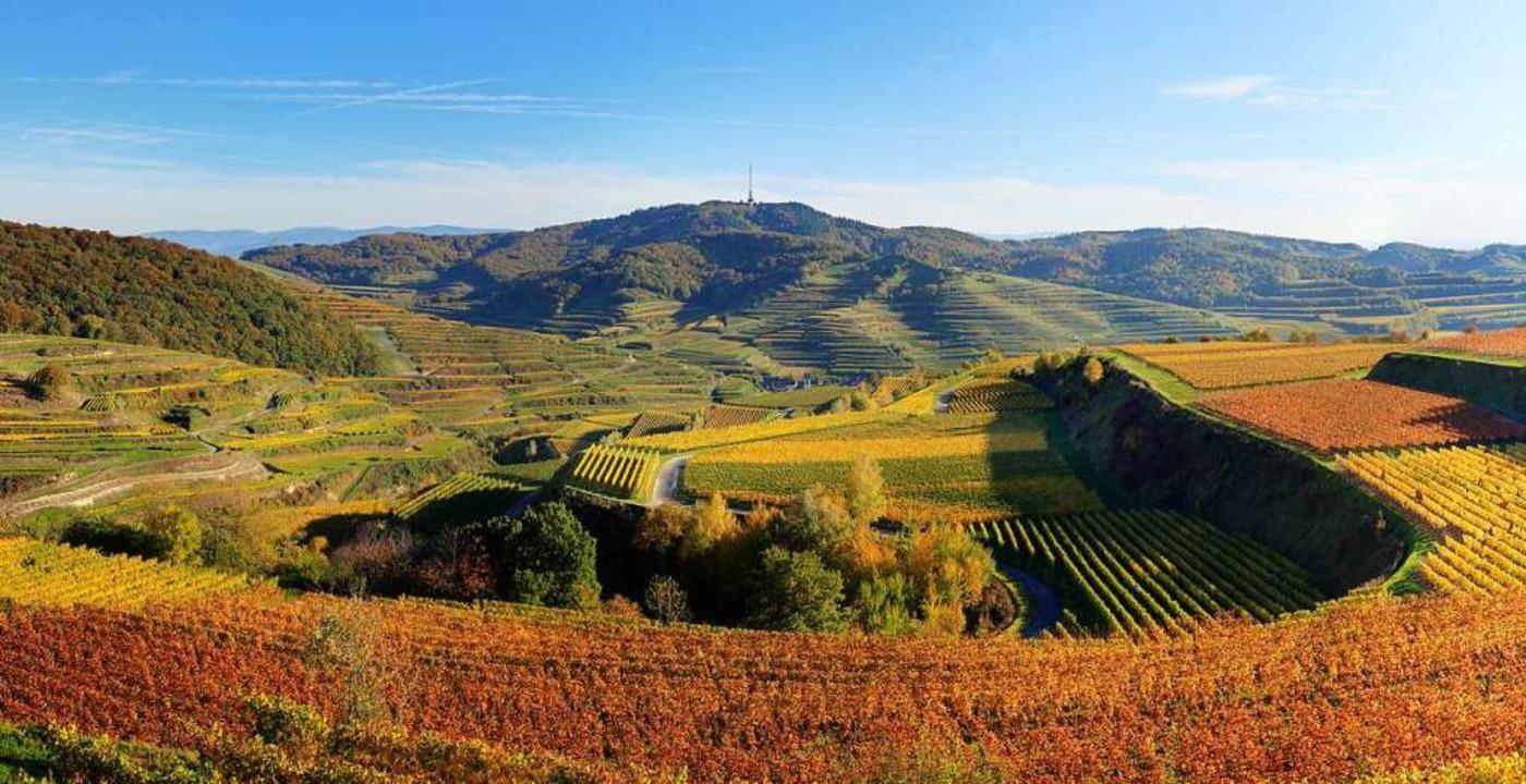Trügerisch: So schön wie dieses Bild v...m badischen Weinbau derzeit nicht aus.  | Foto: Hans-Peter Ziesmer