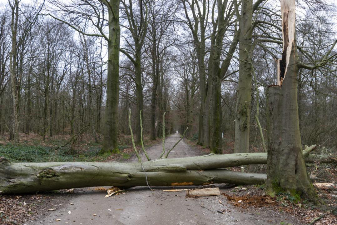 Nach einer ersten Schätzung des Landra...r Schadholz hinterlassen (Symbolbild).  | Foto: Arnulf Stoffel (dpa)