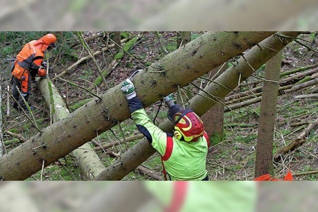 Sturm fällt 25 000 Kubikmeter Holz