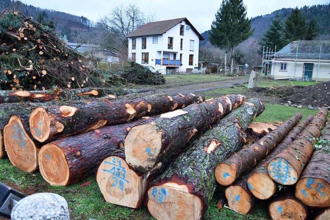 Zahlreiche Bäume mussten gerodet werden.    Foto: Angelika Schmidt