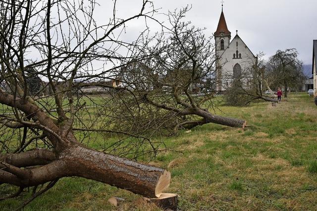 Bäume müssen der neuen Ortsmitte weichen