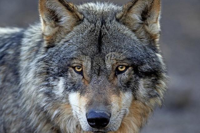 Organspende, Wölfe, Radlerschutz