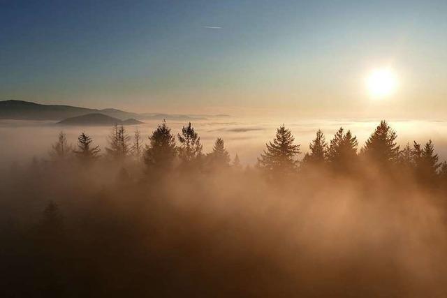 Der Freiburger Schönberg versinkt im Nebel