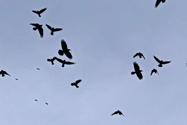 Die Vogelwelt in Rheinfelden wird kleiner