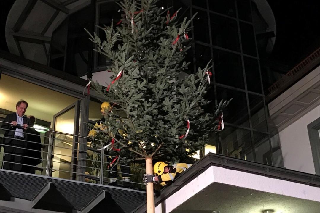 Mitarbeiter der Feuerwehr Heitersheim ...ren den Bürgermeister-Baum am Rathaus.  | Foto: Bernhard Amelung